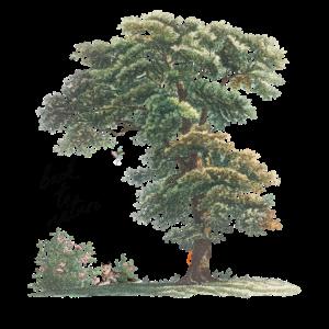 Back To Nature - Zurück zur Natur Baum Natur Gift