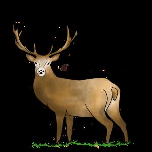 Oh Deer, Hirsch