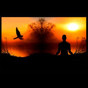 Poster Natur Falke chillen - Meditation