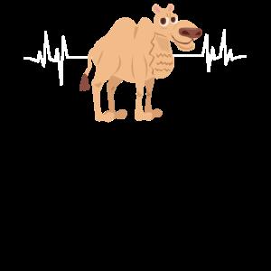 Herzschlag Kamel Dromedar EKG