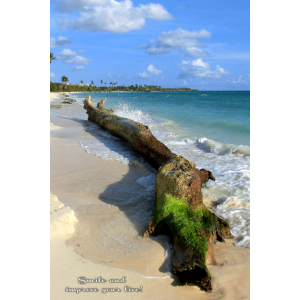 Karibik Stamm