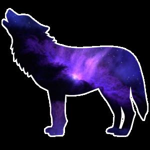 Wolf Vollmond Rudel Dunkel Nacht Tier Tierliebe