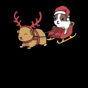 Meerschweinchen Weihnachten Lustig Meerschwein