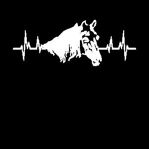 Pferde Freund