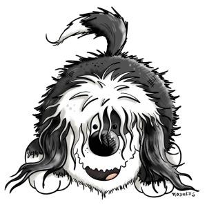 Fröhlicher Tibet Terrier