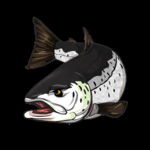 Lachs und Meerforellen Angeln Fishing