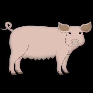Schwein schaut