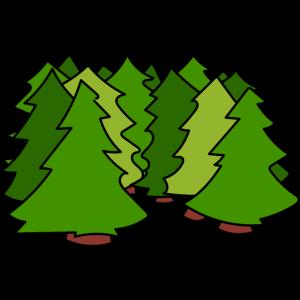 Tannenwald / fir forest