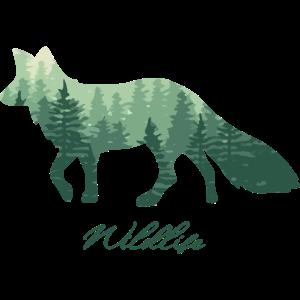 Fuchs Wald Wildlife fox