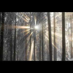 Sonnenstrahlen mit Nebel und Wald.