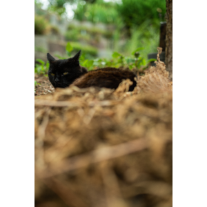 Schwarz - braune Katze