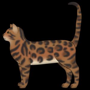 Bengalkatze 3