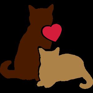 zwei niedliche Katzen ♥ two sweet cute cats ♥