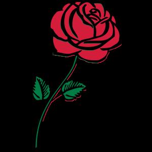 rose_002