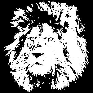 Löwe - Safari - Löwin