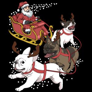 Französische Bulldogge Weihnachten