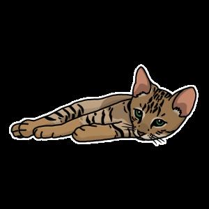 Bengalkatze, Bengal, Katze, Leopardkatze, Comic