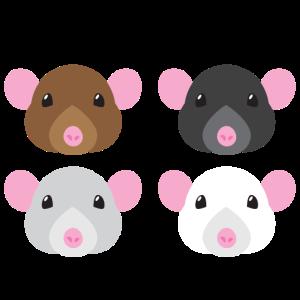 vier Mäuse braun schwarz weiß und grau