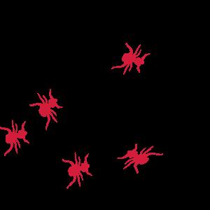 Ameisen als Gewinner