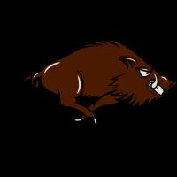 wildschwein gefährlich rennen
