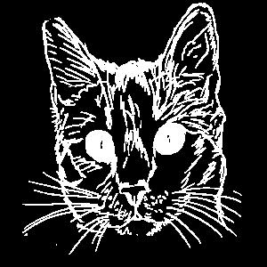 Tier,tiere,Katze,Katzen,Haustier,Tier liebe