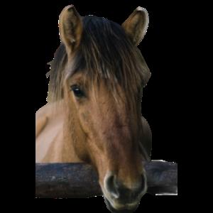 Braunes Pferd ohne Reiter
