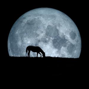 Horse in Moon + Pferd im Mond