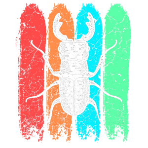 Hirschkäfer Insekt
