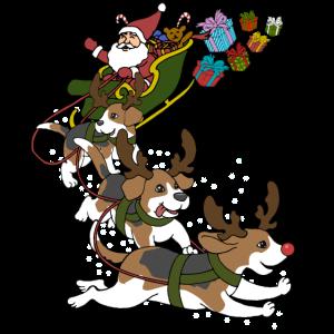 Beagle Weihnachten