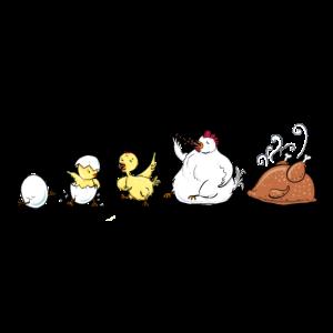 Evolution Of Chicken