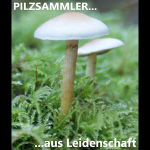 Pilzsammler aus Leidenschaft
