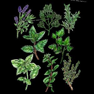 Kräuter: Lavendel Dill Rosmarin Thymian Oregano...