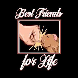 Meerschweinchen Best Friends Haustier Liebhaber