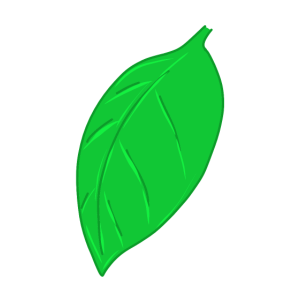 Blatt - Baum