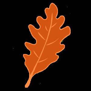 Eiche - Eichenblatt - Herbst