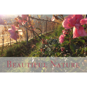 Reben mit Blumen - beautiful nature