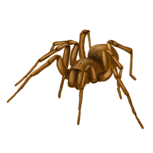 Spinne 1 classic