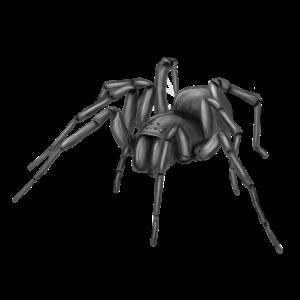 Spinne 1 sw