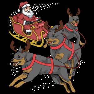 Rottweiler Weihnachten