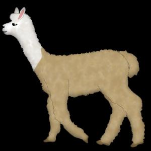 Alpaka 1