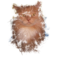 Maine Coon Kater rot