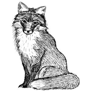 Fuchs Bild Tier Geschenk Abenteuer Süß Liebe