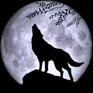 Wolf Vollmond Halloween Nacht Albtraum Wald Natur