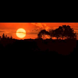 Gitarren im Sonnenuntergang