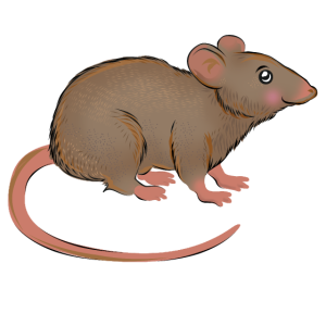 lustige Ratte - Design
