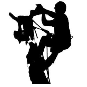 Arborist Baumpfleger