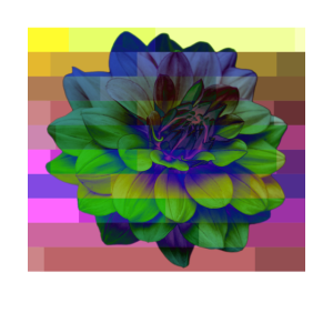 Flower Glitch Design Design