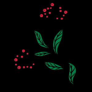 Stechpalme, Ilix, mit Beeren. Weihnachten, Advent.