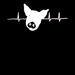 Landwirt Schweine Schwein Landwirtschaft