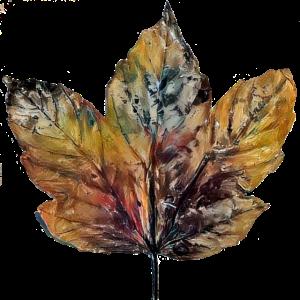 Herbstlaub Ahorn buntes Design